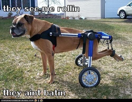 dogs rollin - 6036590336