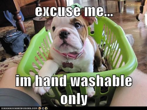 best of the week bulldog dogs excuse me Hall of Fame hand washing laundry puppy washable - 6036677120