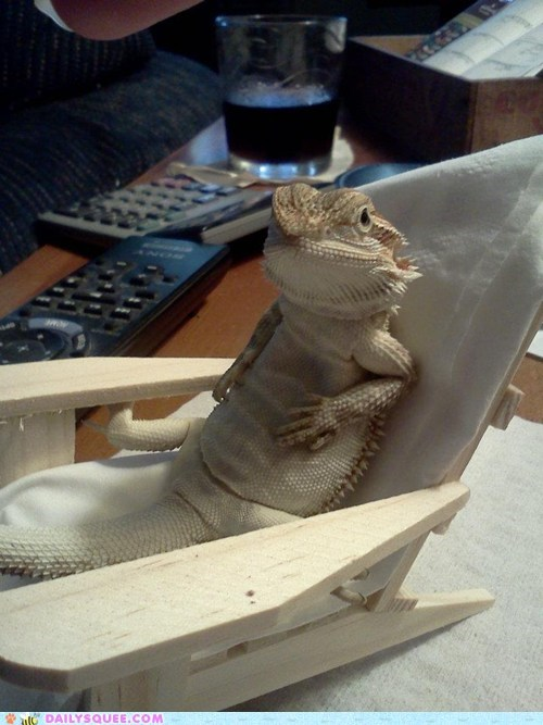 chair,lizard,lounge,pet,reader squees,relax