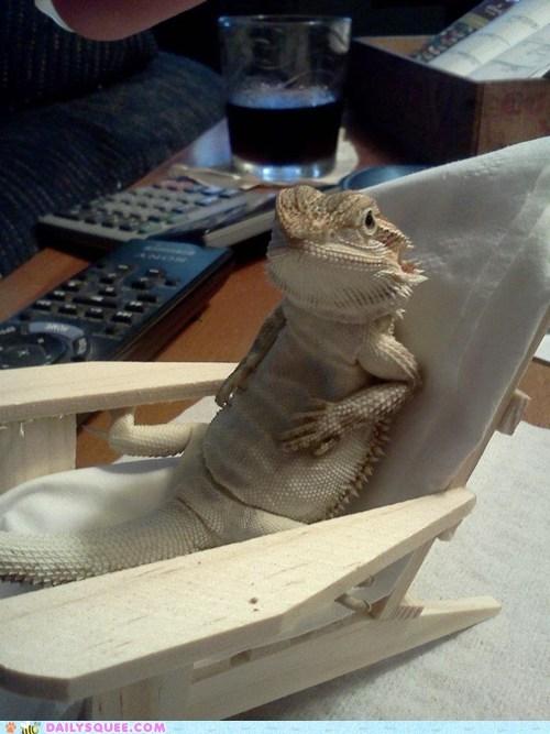 chair lizard pet reader squees relax - 6036719360