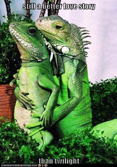 best of the week forever Hall of Fame hug iguana lizards love Other Animals reptile romance still a better love story twilight - 6036849152