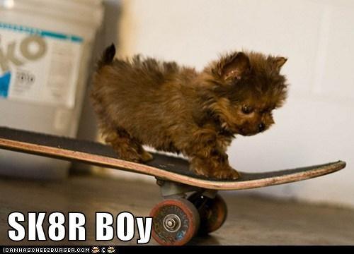puppy,skateboard,yorkie