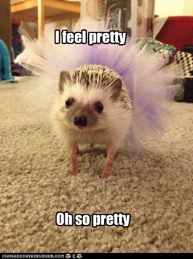 ballet,best of the week,dancing,Hall of Fame,hedgehog,hedgehogs,i feel pretty,pretty,singing,tutu,tutus,west side story