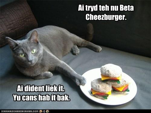 Cheezburger Image 6037290752