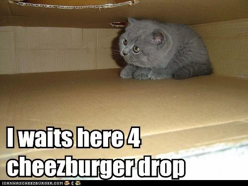 cheezburger,delivery,do want,drop,noms,supplies,wait,waiting