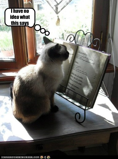 book,cant-read,confused,lol,no idea,reading,siamese