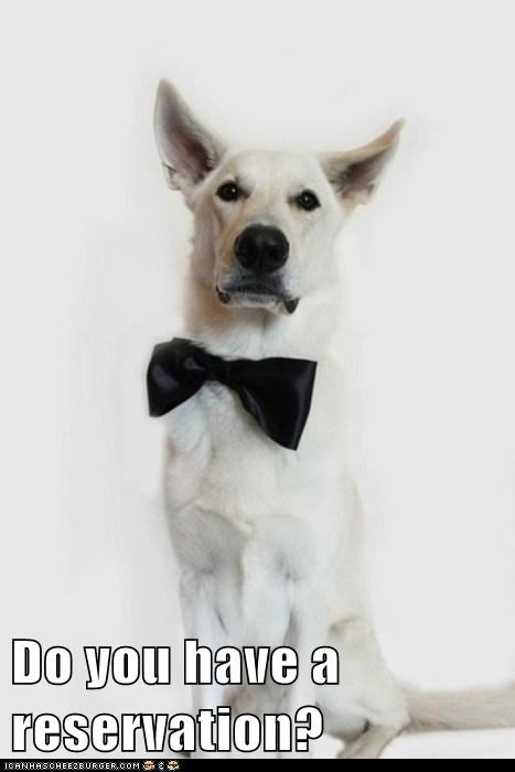 bowtie dogs waiter what breed - 6038039296