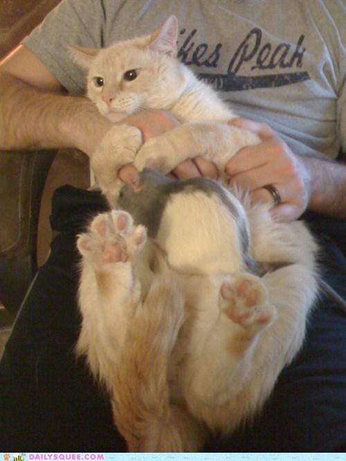 afraid cat friends groom pets rat reader squees - 6038233088