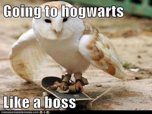 Harry Potter Hogwarts Like a Boss longer mail Owl skateboarding style - 6038880768