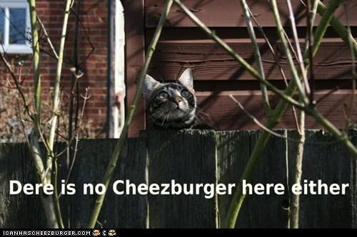 Cheezburger Image 6038987264