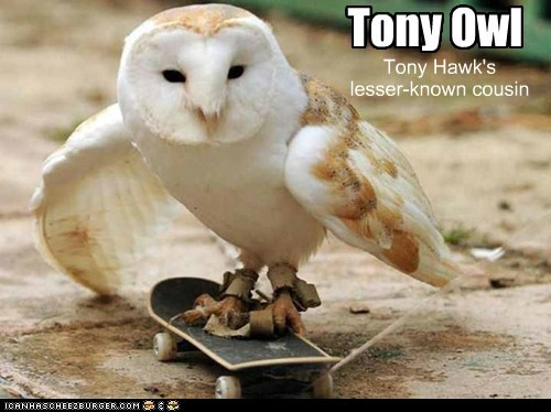 Tony Owl Tony Hawk's lesser-known cousin