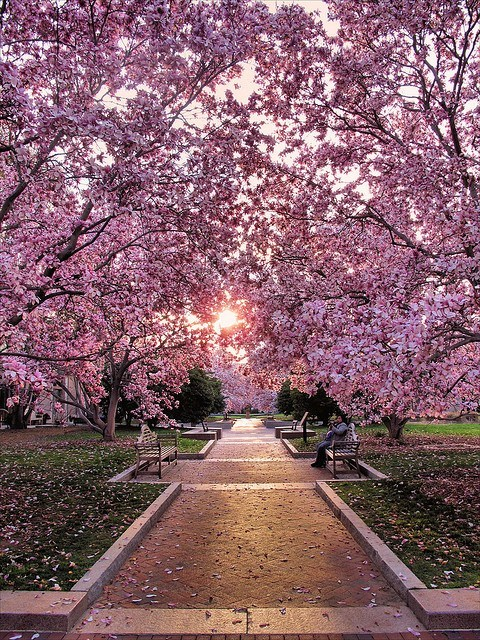 cherry blossoms,Hall of Fame,washington-d-c