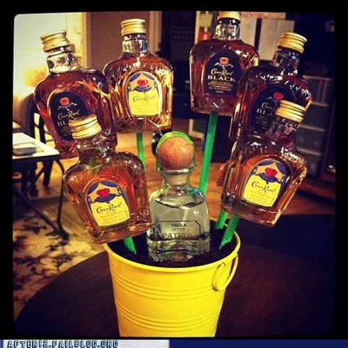 crown royal,liquor,plant,planter,tree