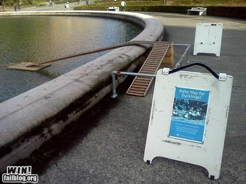 awww bridge cute ducks park - 6039834624