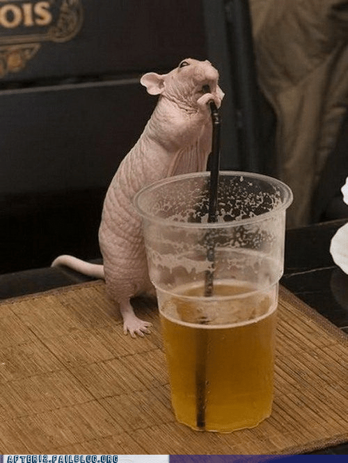 beer,crunk critters,hair,mouse