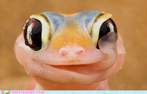 eyeball eyes face gecko lick lizard lizards smile squee tongue