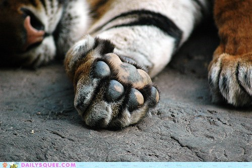 beans,feet,squee spree,tiger,toes