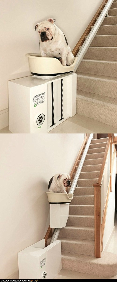 contraptions dogs fat lazy old products stairs technology wtf - 6040324352