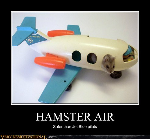 air,hamster,hilarious,jet blue