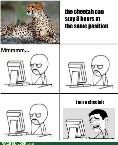 cheetah,computer,f that,Rage Comics