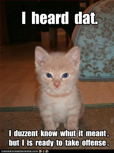 cat Cats dont dont-understand heard i-dont-know kitten listening lolcat mad offense offensive understand - 6040978432
