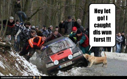 car,dogs,rescue