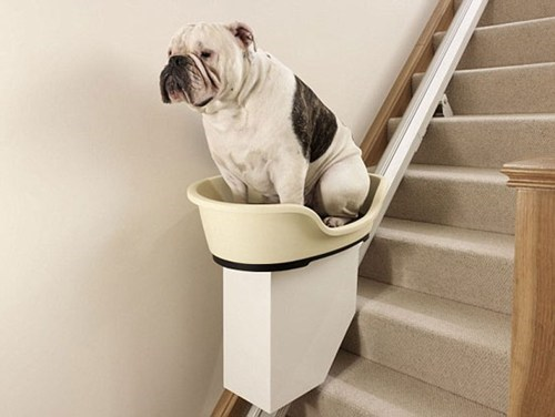 doggeh Photo stair of the dog stairlift - 6041227776