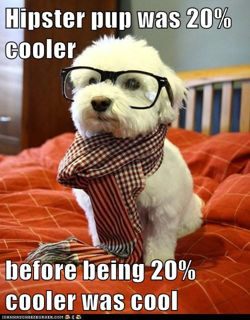 dogs hipster what breed - 6041436928