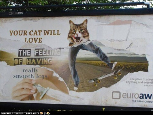 billboards,Cats,juxtaposition,legs,shaving,signs,wtf