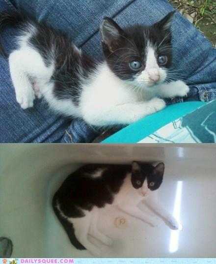 cat kitten oreo pet reader squees - 6042475776