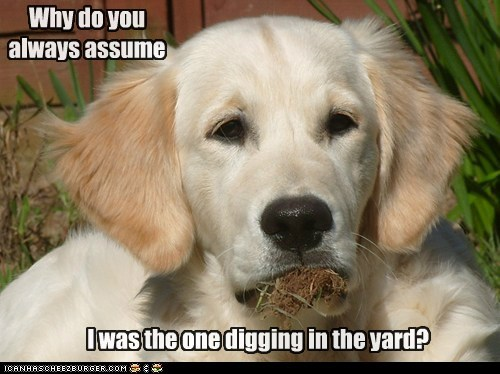 digging dirt dogs golden retriever - 6042490368