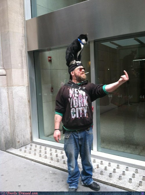 cat,Hall of Fame,new york,so hardcore,the bird