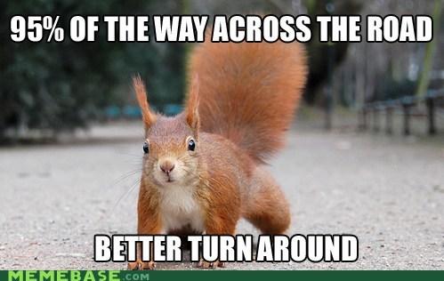 Memes road squirrel turn around - 6044428800