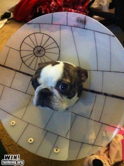 cone,dogs,nerdgasm,star wars