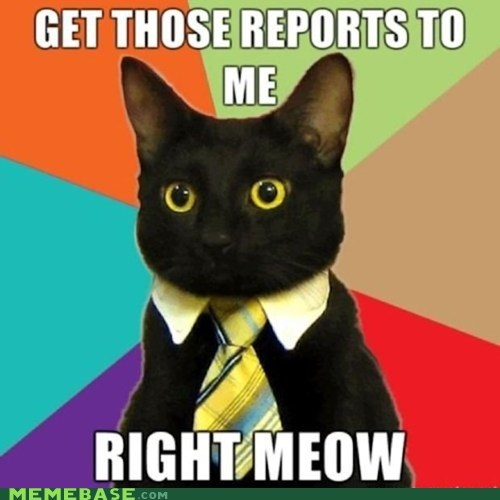 Business Cat meme madness meow - 6044475904