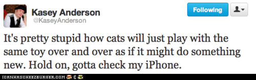 Cats,iPhones,phones,playing,stupid,toys,tweets,twitter