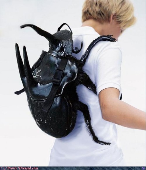 backpack,beetle,bug,clever,creepy,insect