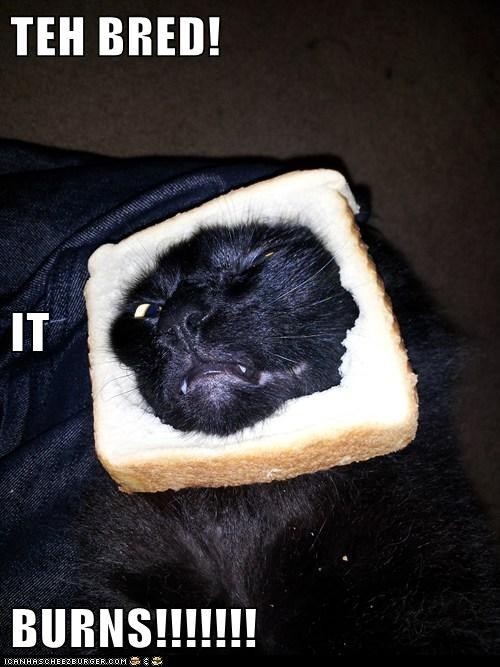 bread burn cat face hurt inbred lolcat ouch my face - 6044691200