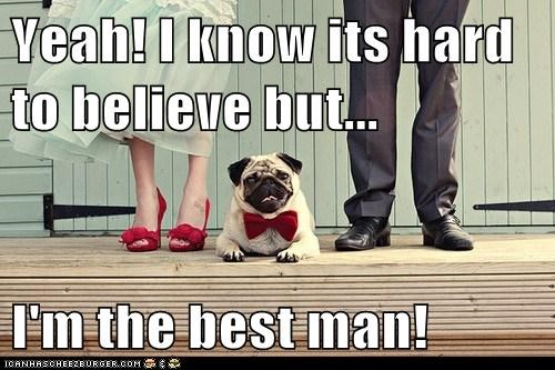 best man,dogs,pug,wedding