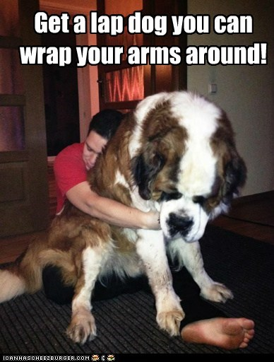 arms,best of the week,dogs,Hall of Fame,huge,hugging,hugs,lap dog,lap dogs,st bernard