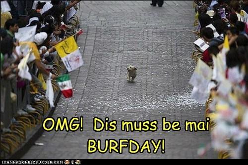 birthday dogs running - 6044829952