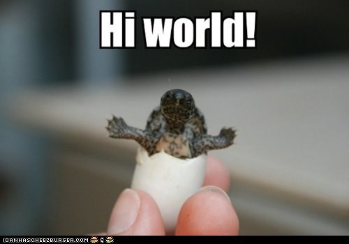 caption,eggs,hands,hello,shells,tiny,turtle,turtles,world