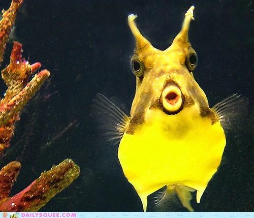 face fish swim water - 6045135360