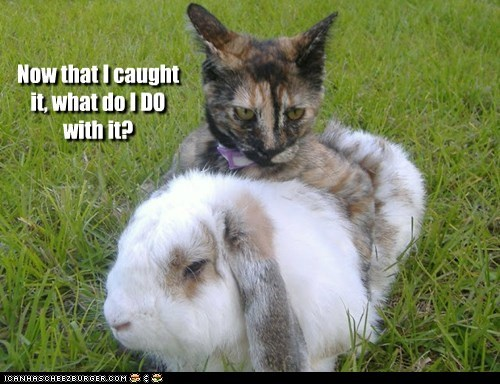 bunny caught confused do now what - 6045365504