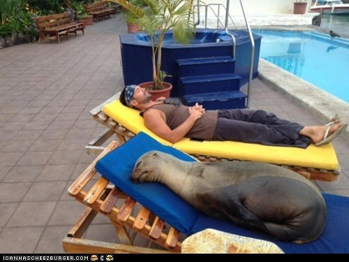 awesome best of the week hotel injury news panchita relaxing sea lion sea lions story - 6045392128