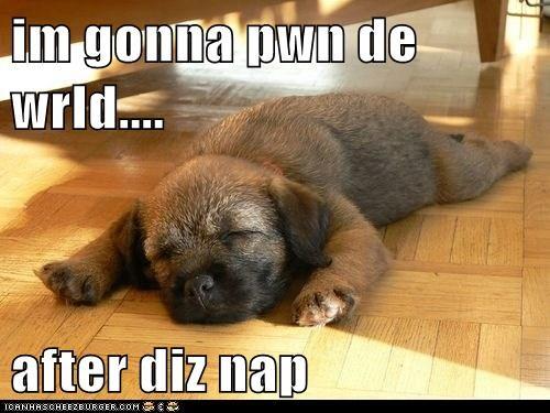 nap-what-breed puppy pwn - 6045403136