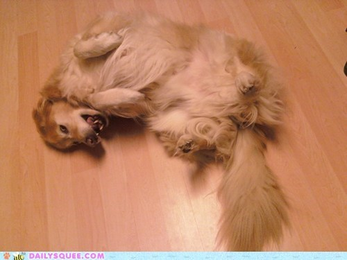 belly floor golden retriever pet rubs - 6045486080