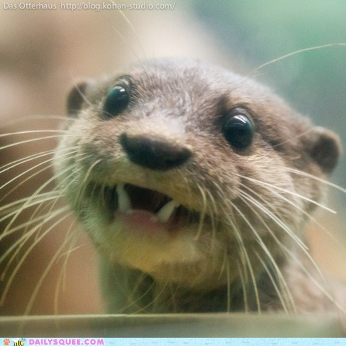 face otter otters river otter smile smiling squee teeth - 6045499392