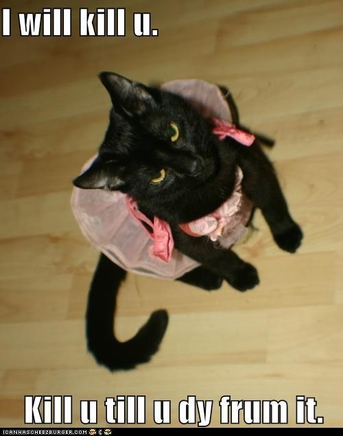 cat classic evil hate kill lolcat murder - 6045575936