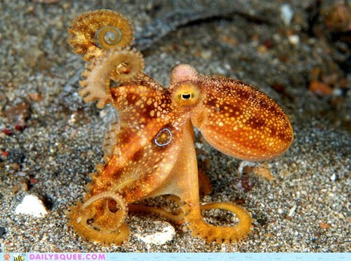 octopus orange squee spree wave - 6045668352